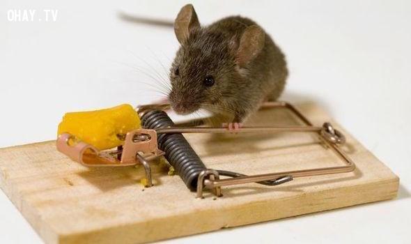Bài học từ cái bẫy chuột 1