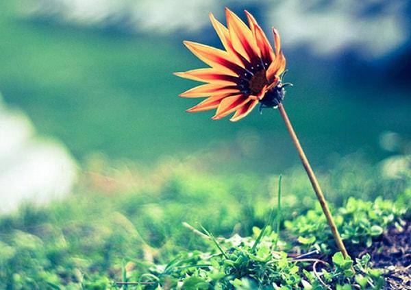 7 điều cần ghi nhớ để có một cuộc sống hạnh phúc