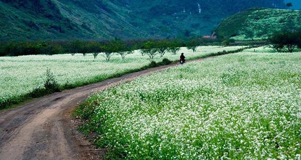 Mộc Châu nức tiếng gần xa bởi những mùa hoa đẹp ngây ngất