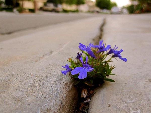 Một bụi hoa mọc lên từ rãnh bên đường