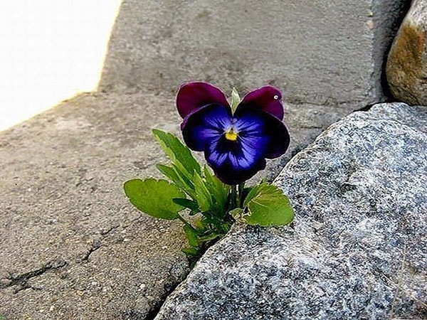 Một đóa hoa vươn lên từ khe hở để sinh trưởng