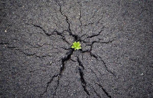 Một gốc cây xanh lấy hết sức mình đẩy đường nhựa lên để đâm chồi nảy lộc