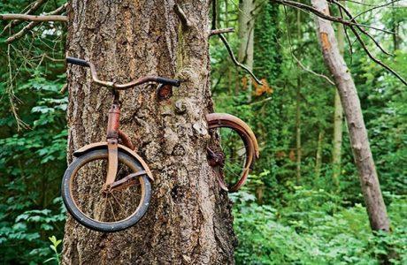 Sự thật đằng sau câu chuyện về cây nuốt xe đạp nổi tiếng ở Washington