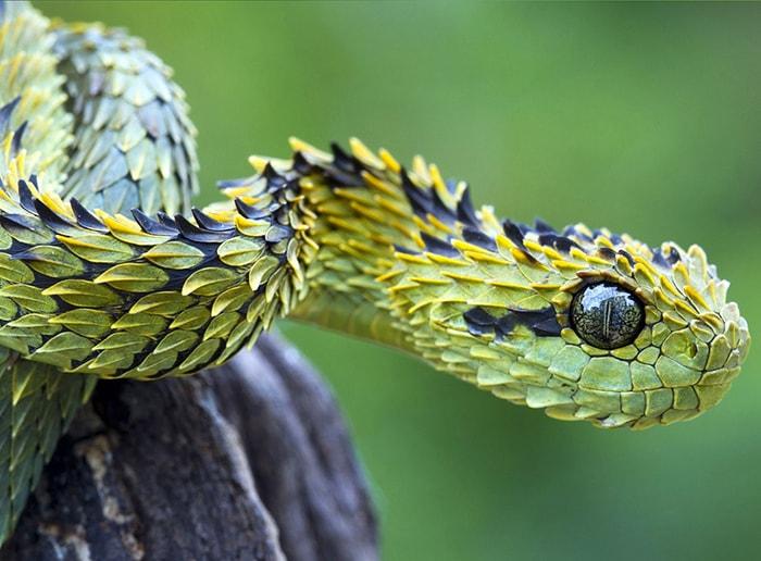 Sợ rắn là 1 nỗi sợ hãi phổ biến nhất thế giới