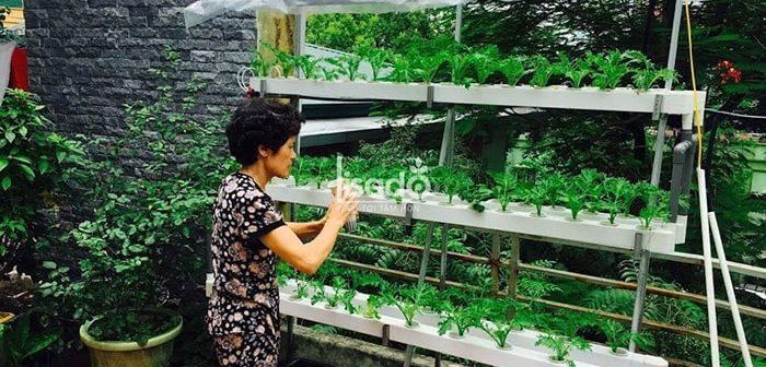 Chi phí đầu tư trồng rau thủy canh có đắt không?