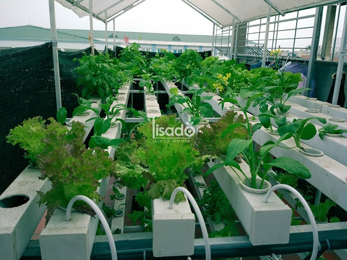 Phương pháp trồng rau thủy canh đang khá phổ biến hiện nay